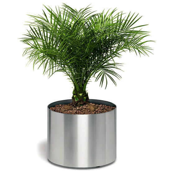 Brushed Stainless Steel Planter on Wheels/ BM-65104